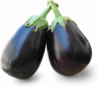 Ecoware Brinjal Seed(50 per packet) at flipkart
