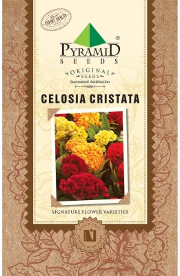 Pyramid cockscomb, Feathered amaranth, Woolflower Seed(200 per packet)  available at flipkart for Rs.105