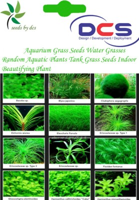 DCS Aquarium Grass Seeds Seed(20 per packet) on Flipkart | ePrice