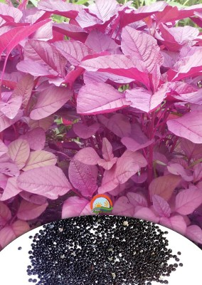 Agro Max Red Spinach (amaranth) Vegetable Seeds Seed(1000 per packet)  available at flipkart for Rs.99
