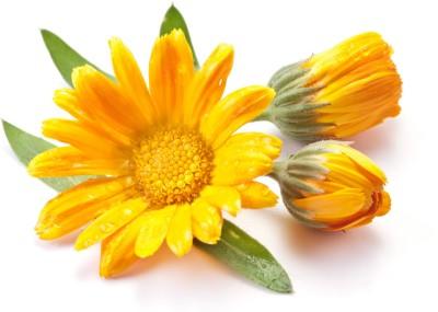 Saaheli Marigold Flower Seeds Seed(10 Per Packet) at flipkart