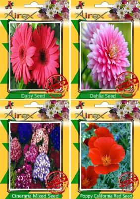 https://rukminim1.flixcart.com/image/400/400/plant-seed/z/h/e/airex-30-daisy-dahlia-cineraria-mixed-and-poppy-california-red-original-imaepejmfmjgceyp.jpeg?q=90