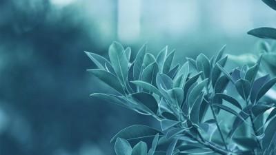 https://rukminim1.flixcart.com/image/400/400/poster/m/f/q/small-nature00118-3d-abstract-nature-poster-original-imaehyrfm4z98ers.jpeg?q=90