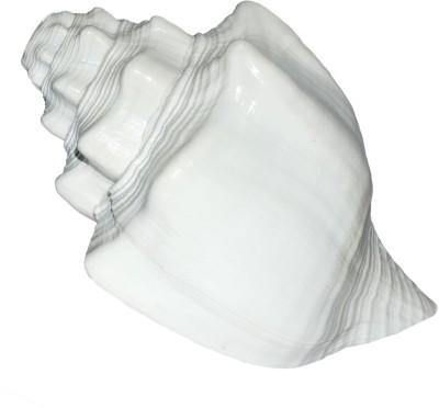 Spiritual Max Vishnu Vahan Garuda Shankh Sea Shell / Dattatreya (Bajanewala Puja Shankh) 20 Cms. Big Blowing Shankh(White) at flipkart