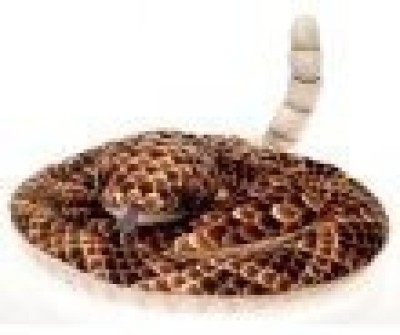 https://rukminim1.flixcart.com/image/400/400/stuffed-toy/u/4/r/fiesta-toys-25-rattlesnake-rattle-snake-coiled-plush-stuffed-original-imaedy59pkyxgrgc.jpeg?q=90