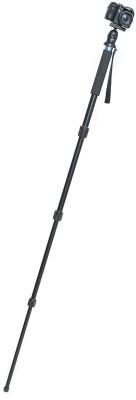 https://rukminim1.flixcart.com/image/400/400/tripod/monopod/p/f/a/fotopro-nga-54-502q-aluminium-professional-monopod-with-ball-original-imaen55rg44gtbgr.jpeg?q=90