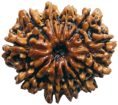 ByCue Ceritfied 11 Mukhi Nepal Rudraksha 27.90mm Wooden Yantra(Pack of 1) at flipkart