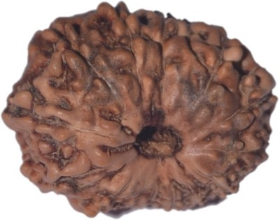 Navkaar Creation 14 Mukhi Rudraksha Java 18.73mm Wooden Yantra at flipkart