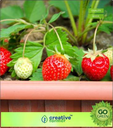 creative farmer Potted Strawberry Seeds Seed