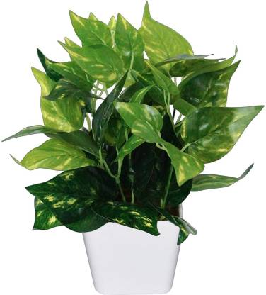 Delmohut Artificial Natural Money Plant Leaf Indoor/Outdoor Plant Decorative Plant with Pot (27 cm x 22 cm ) Green Assorted Artificial Flower  with Pot