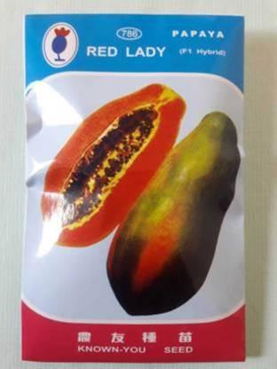 FRESH SEEDS Red Lady 786 Papaya Taiwan Seeds F1 Hybrid Seed(80 Seeds) Seed