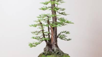 New Geeta Store bonsai hybrid seeds with fress seeds Seed