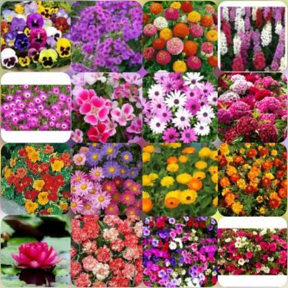 Hosta flowers perennials decorative Lilies purple plants home garden 150 seeds