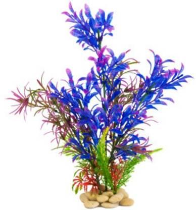 Naturo Imported Very Beautiful Aquarium Blue Grass Seed