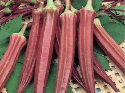 NATIONAL GARDENS Exotic Red Ladies Finger (Red Okra) Seed