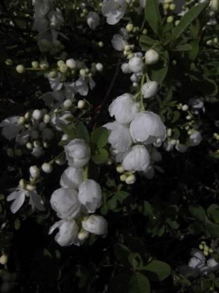 Seedlings india Burf Mix Seed