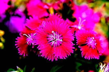 Colourful Flowers Canvas Art