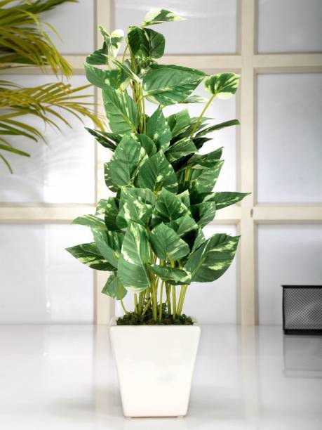 FOURWALLS Artificial Pothos Plant In A Ceramic Vase (50 Cm Tall, Geen/White) Multicolor Assorted Artificial Flower  with Pot