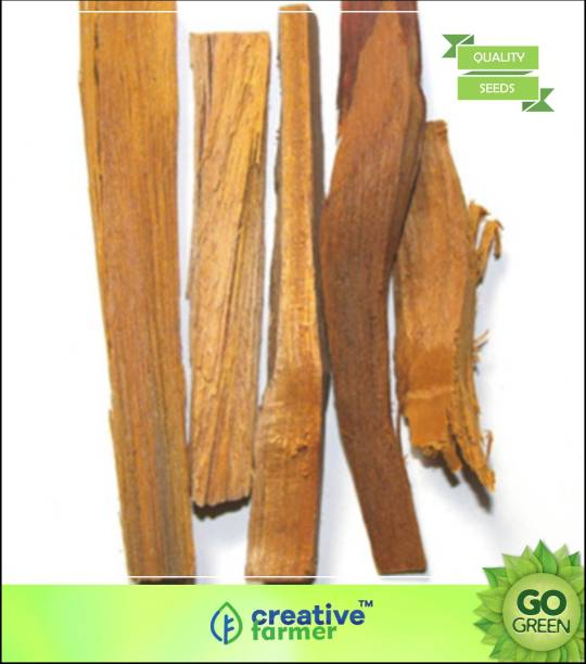 plywood trees in india