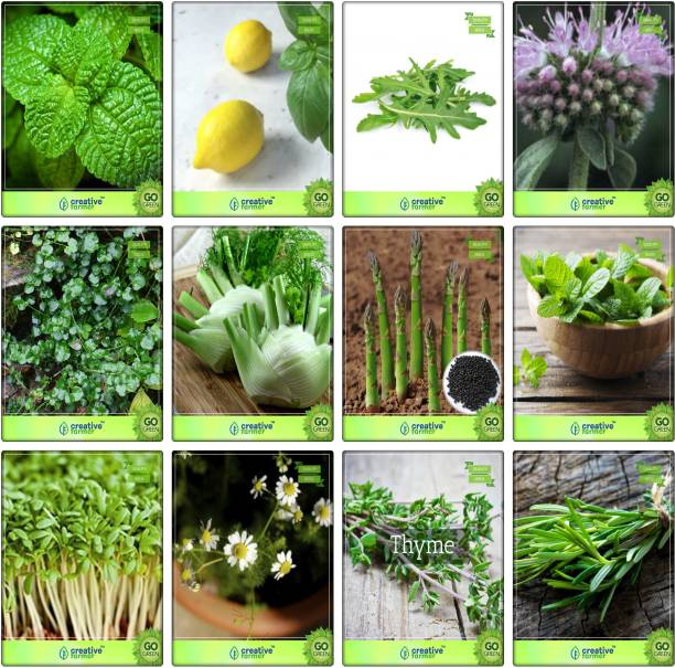 Aquarium Herbs - Buy Aquarium Herbs Online at Best Prices In