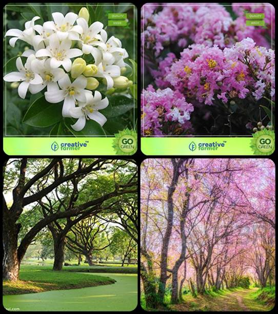 Omen Trees Buy Omen Trees Online At Best Prices In India