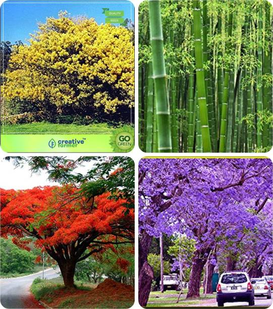 Nskon Trees Buy Nskon Trees Online At Best Prices In India