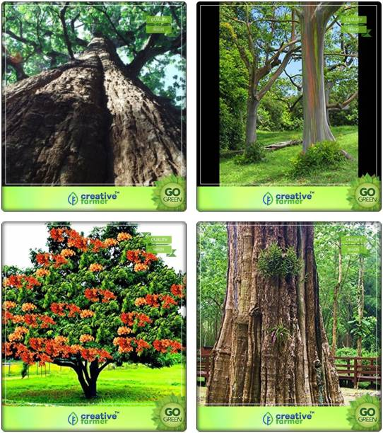 Stanmore Trees Buy Stanmore Trees Online At Best Prices In India