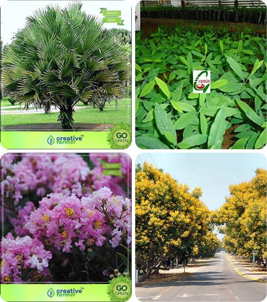 Crox Trees Buy Crox Trees Online At Best Prices In India