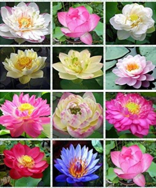 Basra Flowers Buy Basra Flowers Online At Best Prices In India
