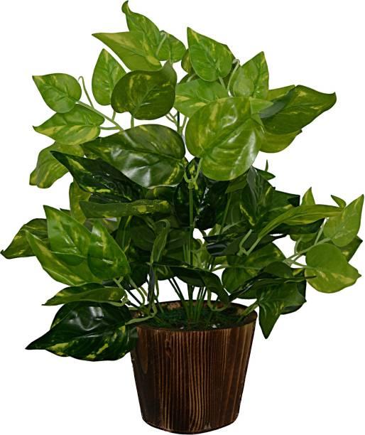 fancymart Artificial Money plant (33 cm/ 13 inchs) in Wood round big pot Artificial Plant  with Pot