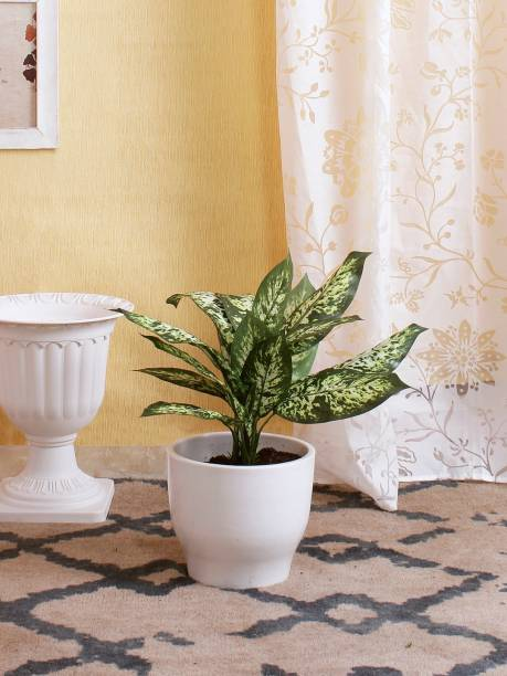 FOURWALLS Artificial Dieffenbachia Bush without pot (Dark Green, 52 cm Tall) Artificial Plant