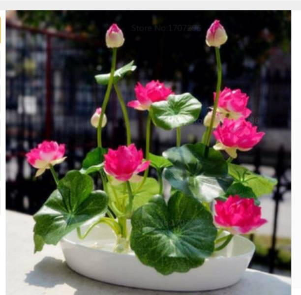 Plants Buy Indoor Plants Outdoor Plants At Best Prices Available
