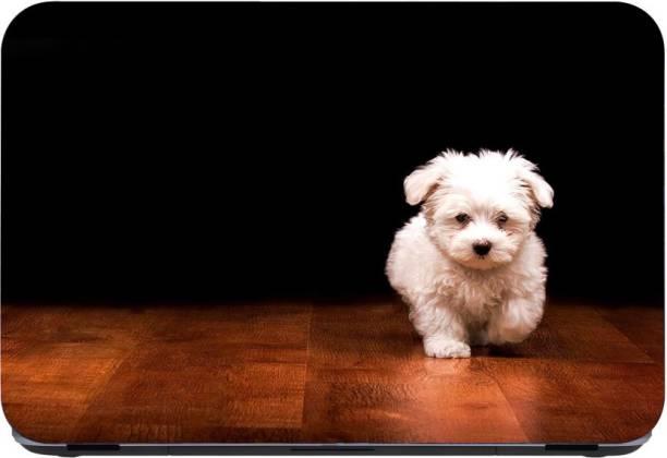 Flipkart SmartBuy Pomeranian Dog 3m or avery imported vinyl woith lamination Laptop Decal 15.6