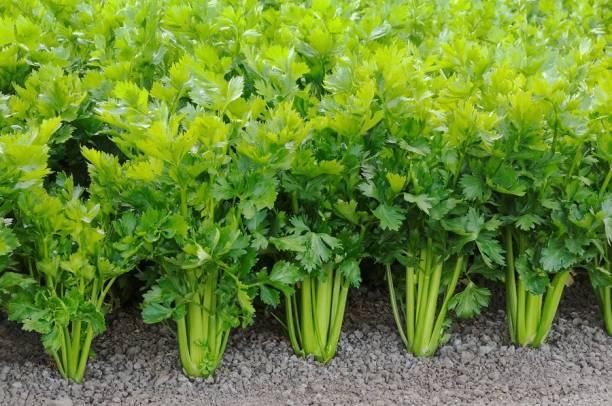 Ritika Herbs - Buy Ritika Herbs Online at Best Prices In
