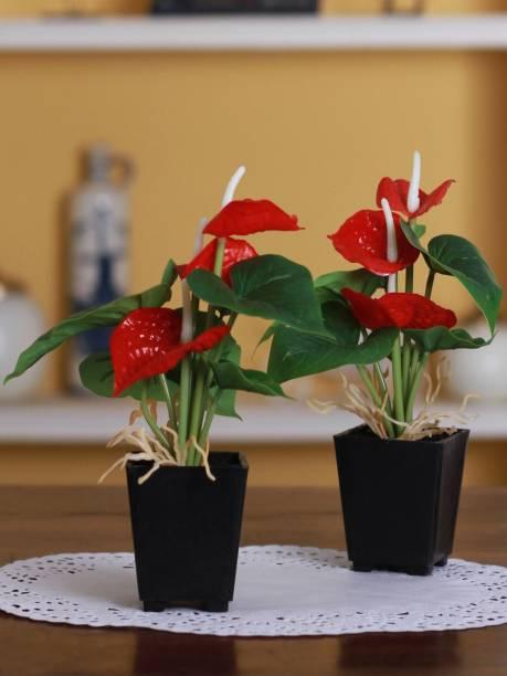 FOURWALLS Artificial Anthurium Flower in a Plastic Vase (20 cm, Red, Set of 2) Bonsai Artificial Plant  with Pot