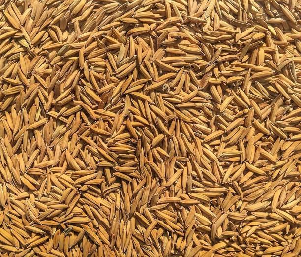 Green World PUSA BASMATI - 1509 VARIETY 5 KG SEEDS Seed