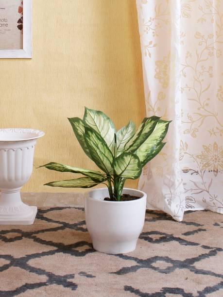 FOURWALLS Artificial Dieffenbachia Bush without pot (Green/White, 52 cm Tall) Artificial Plant