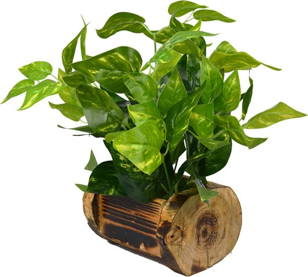 fancymart Money Plant Artificial Plant  with Pot