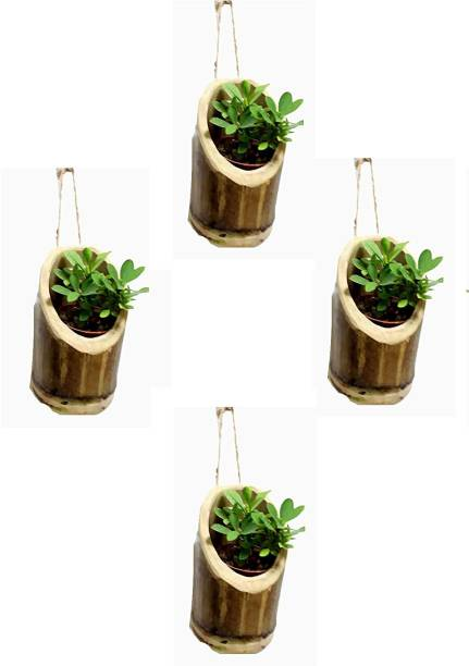 Plastic Plant Containers - Buy Plastic Plant Containers