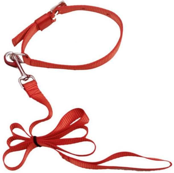 ADIOS GOOD QUALITY 0.5 INCH PUPPY & CAT BELT Dog Collar & Leash