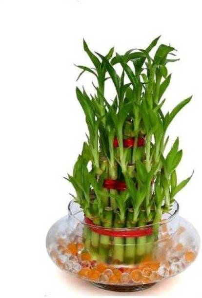 Dr. Homz N Kitch Two Layer Bamboo Plant