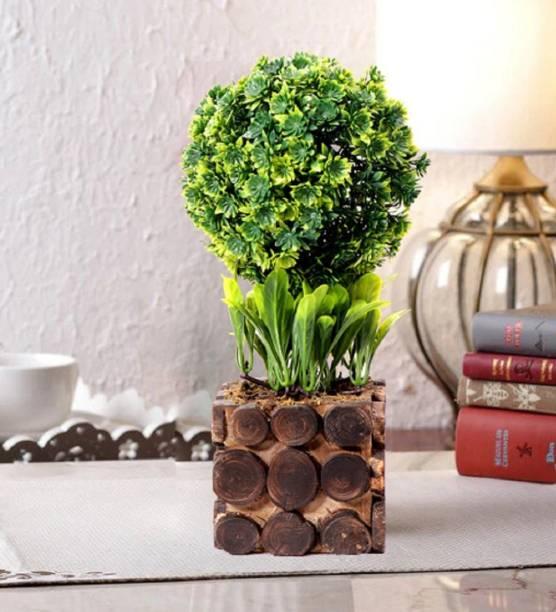 Litleo Bonsai Artificial Plant  with Pot