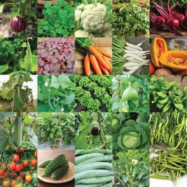Aero Seeds Vegetable Seeds Bank For Home Garden 25 Varieties - 1320 Seeds Seed