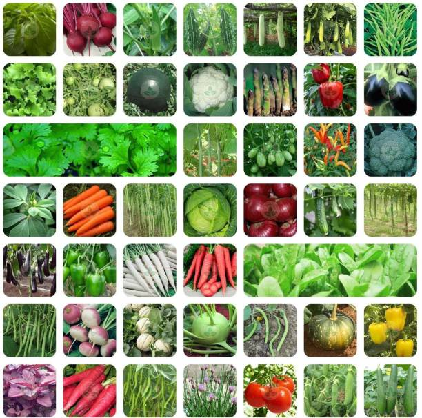 Aero Seeds 45 Variety of Vegetable Seeds with Instruction Manual Seed