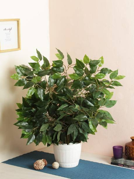 FOURWALLS Artificial Decorative Ficus Plants & 42 Leaves (60 cm Tall, Set of 6, Green) Artificial Plant