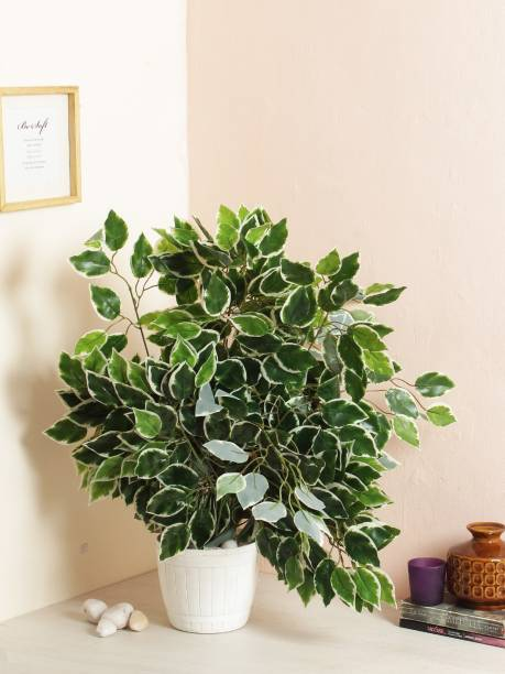 FOURWALLS Artificial Decorative Ficus Plants & 42 Leaves (60 cm Tall, Set of 6, Green/White) Artificial Plant