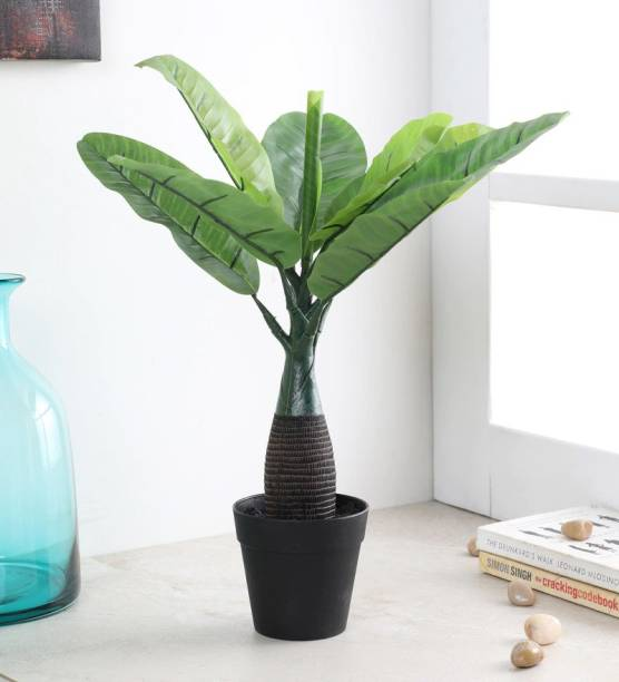 FOURWALLS Artificial Bottle Banana Plant Without Pot for Home and Office Décor Artificial Plant