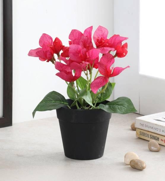 FOURWALLS Artificial Bougainvillea Flowers in a Plastic Pot for Tabletop Décor (20 cm, Pink) Bonsai Artificial Plant  with Pot