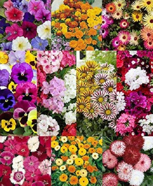 BEE Garden Flower Seeds : Plant Seeds For Home Garden Flowers Combo of 12 Packet of Seeds Winter, Summer & Spring & All Season Garden Flower Seed petunia,marigold,ice plant,pansy,phlox,lotus,gazania,verbena,dahlia,dianthus,daisy And calendula Seed