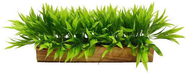 Flipkart Perfect Homes Artificial Plant Bamboo Leaves in Wooden Tray Wild Artificial Plant  with Pot
